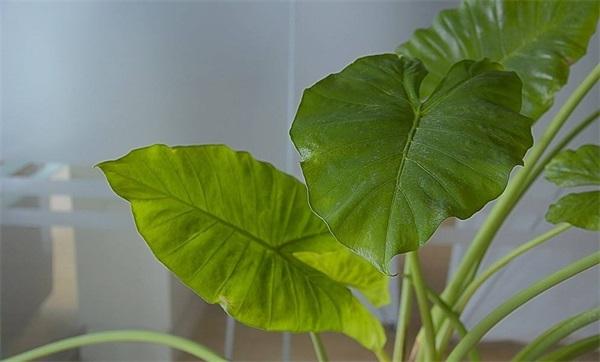 办公室健康花卉绿植